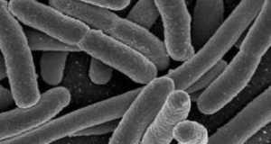 Disinfezioni e Sanificazioni con Ozono e Nebulizzaione ULV
